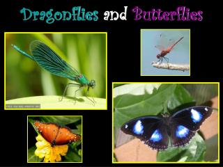 Dragonflies and Butterflies