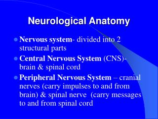 Neurological Anatomy
