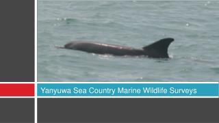 Yanyuwa Sea Country Marine Wildlife Surveys