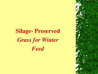 Silage- Preserved Grass for Winter Feed