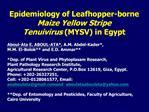 Epidemiology of Leafhopper-borne  Maize Yellow Stripe  Tenuivirus MYSV in Egypt