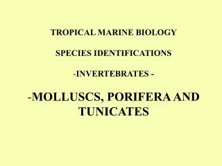 TROPICAL MARINE BIOLOGY  SPECIES IDENTIFICATIONS  INVERTEBRATES -  MOLLUSCS, PORIFERA AND TUNICATES