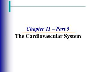 Chapter 11   Part 5 The Cardiovascular System