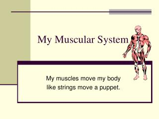 My Muscular System
