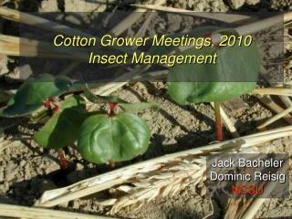 Cotton Grower Meetings, 2010 Insect Management