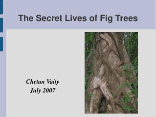 The Secret Lives of Fig Trees