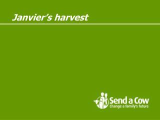 Janvier s harvest