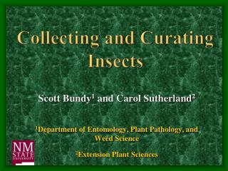 Collecting and Curating Insects