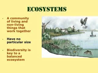 A community of living and non-living things that work together  Have no particular size  Biodiversity is key to a balanc