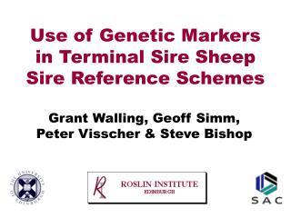 Gene Detection in Terminal Sire Sheep Sire Reference Schemes