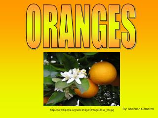 A Brief History of the Orange: