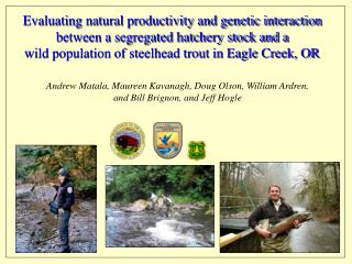 Evaluating natural productivity and genetic interaction  between a segregated hatchery stock and a  wild population of s