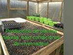 Producci n de plantas nativas, bajo condiciones de invernadero