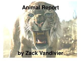 Animal Report       by Zack Vandivier