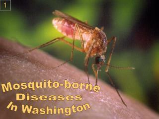 Mosquito-borne