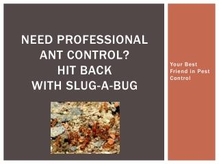 Need Professional Ant Control? Hit back with Slug-A-Bug