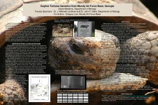 Gopher Tortoise Genetics from Moody Air Force Base