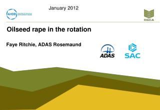 Oilseed rape in the rotation