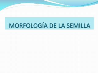 MORFOLOG A DE LA SEMILLA