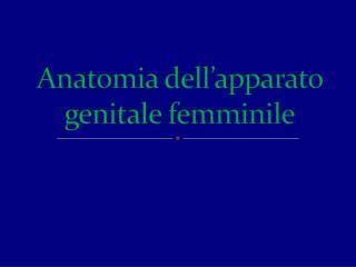 Anatomia dell apparato genitale femminile