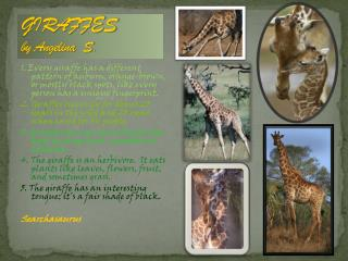 GIRAFFES  by Angelina  S.
