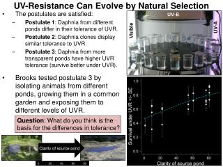 UV-Resistance Can Evolve by Natural Selection