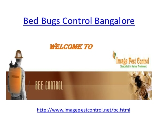 Bed Bugs Control Bangalore