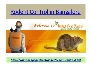 Rodent Control Bangalore