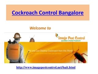 Cockroach Control Bangalore