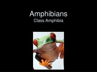 Amphibians Class Amphibia