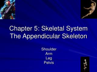 Chapter 5: Skeletal System The Appendicular Skeleton