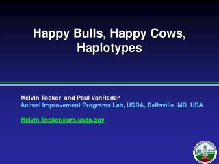 Happy Bulls, Happy Cows, Haplotypes