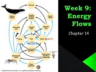 Week 9: Energy Flows