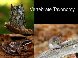 Vertebrate Taxonomy