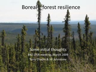 Boreal    forest resilience