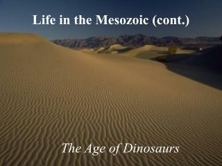 Life in the Mesozoic cont.