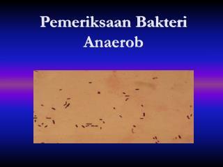 Pemeriksaan Bakteri Anaerob