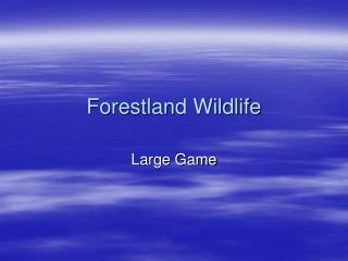 Forestland Wildlife