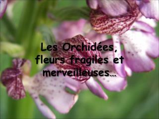Les Orchid es,  fleurs fragiles et merveilleuses