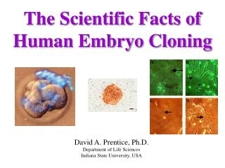 The Scientific Facts of Human Embryo Cloning
