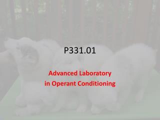 P331.01