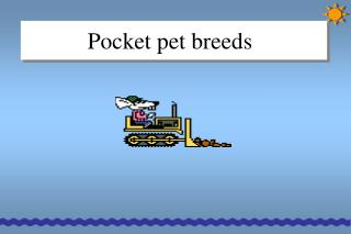 Pocket pet breeds