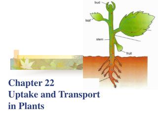 Chapter 22  Uptake and Transport in Plants