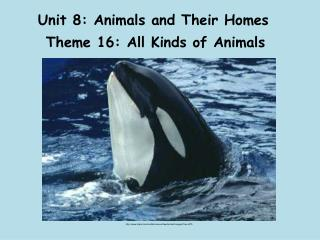 Unit 8: Animals and Their Homes