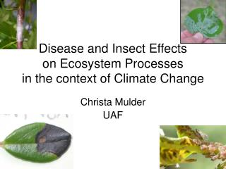 Disease and Insect Effects  on Ecosystem Processes in the context of Climate Change