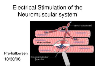 Electrical Stimulation of the Neuromuscular system