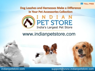 Dog Leashes and Harnesses Make a Difference to your  Pet