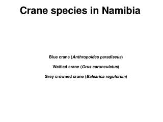 Crane species in Namibia