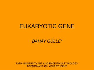 EUKARYOTIC GENE