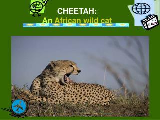 CHEETAH:  An African wild cat
